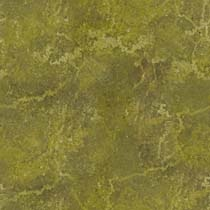 Algae%20Covered.jpg