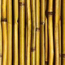Bamboo%20Fence.jpg