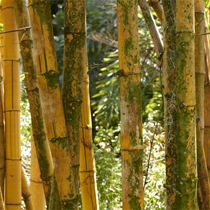 Bamboo%20Garden.jpg