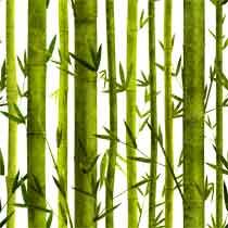 Bamboo%20Lessons.jpg