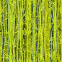Bamboo%20Overlay.jpg