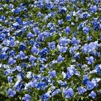 Blue%20Meadow.jpg